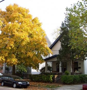 Michigan Daily: Student housing, Monastic living